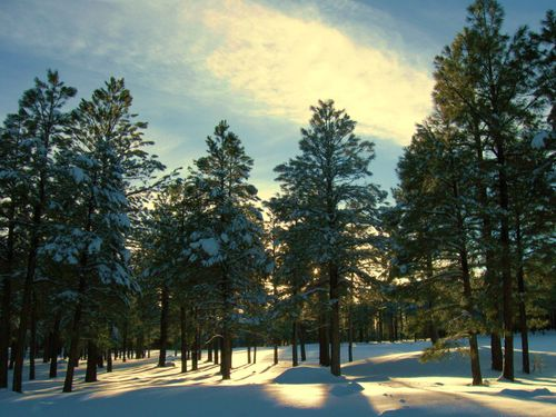 Flagstaff Snow2